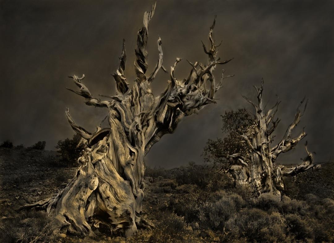 bc-pines-6354-bronzetone-final-1080