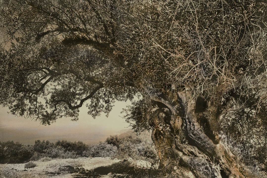 olive-tree-3-bronzetone-iv-1080