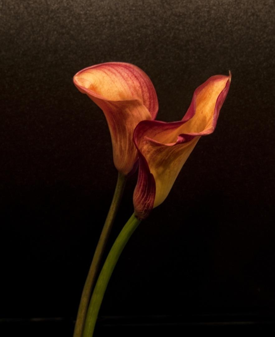 lilies-5251final-1080
