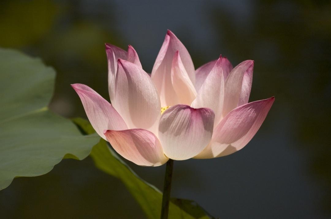 lotus-19-05-1080