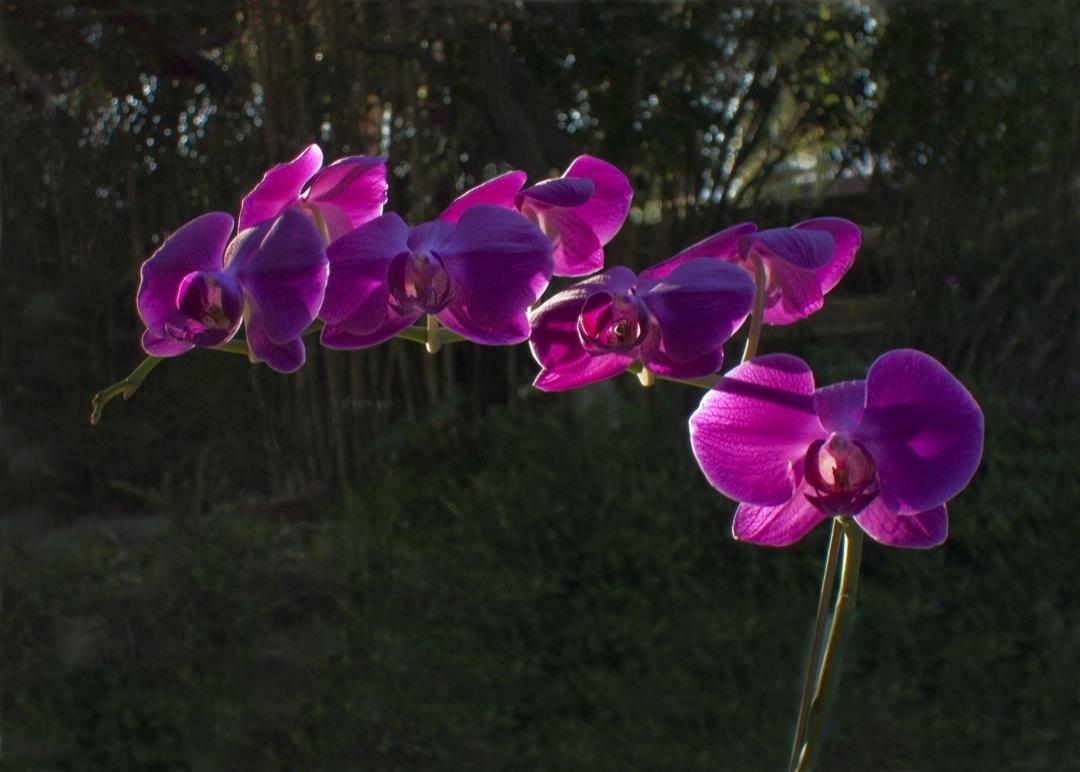 orchids-498-copy-1080