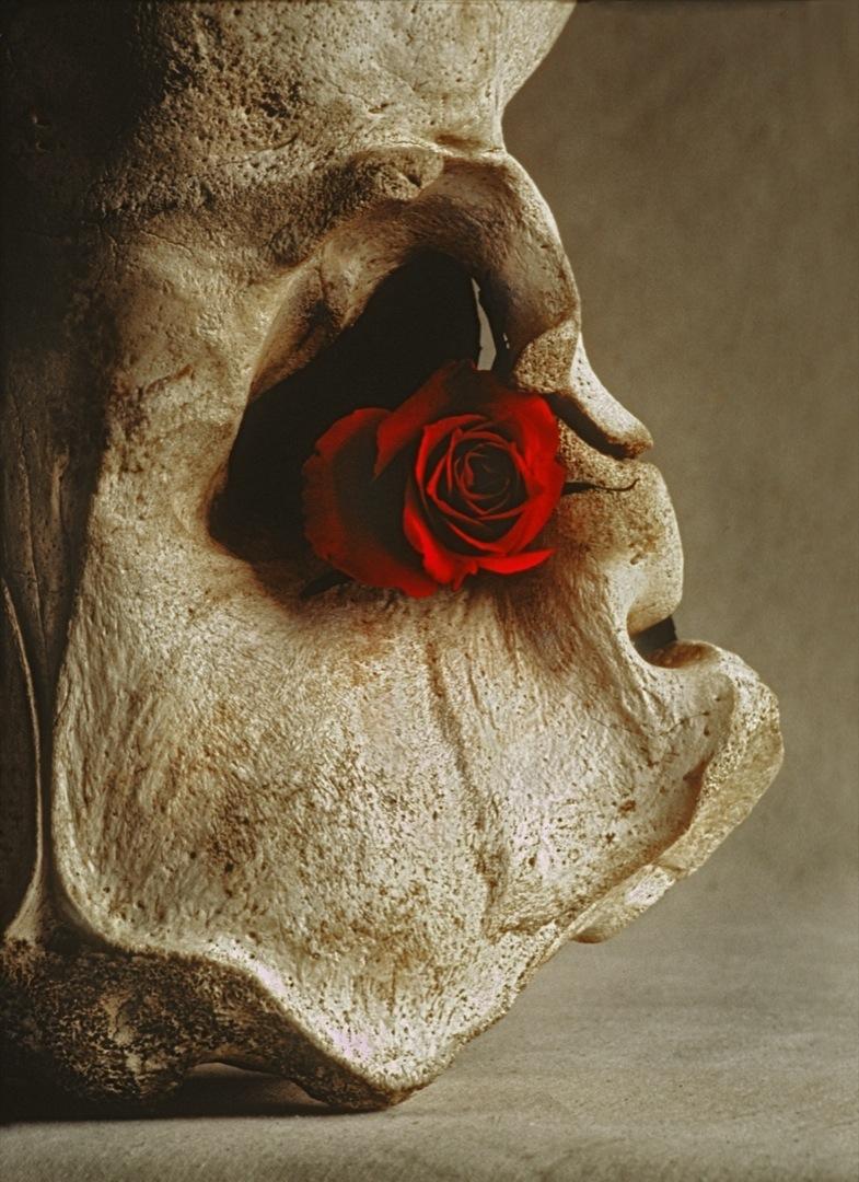 rose-skull-1-1080