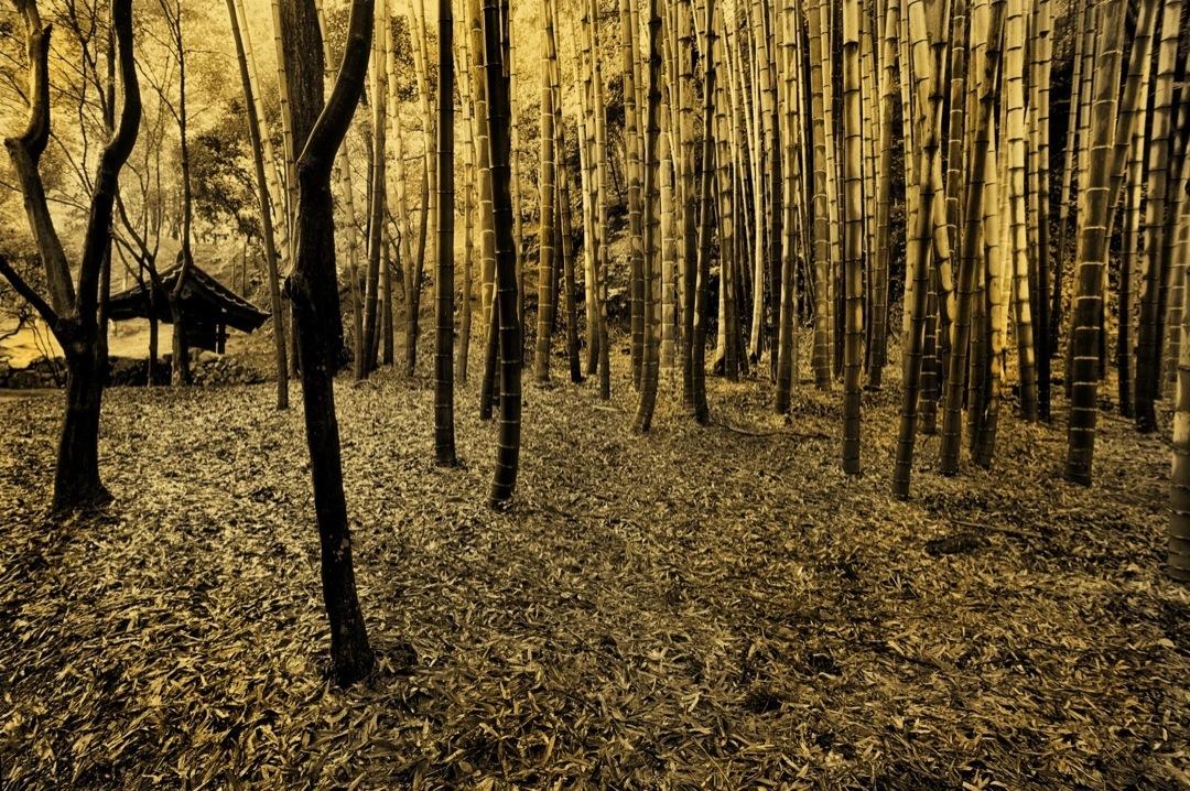 saihoji-bamboo-v-bronzetone-1080