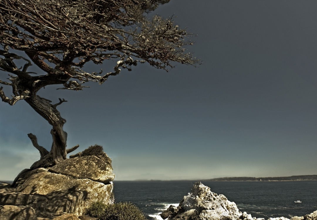 POINT-LOBOS-PANO-2--1080