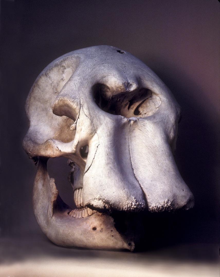 elephant-skull-final-1-1080