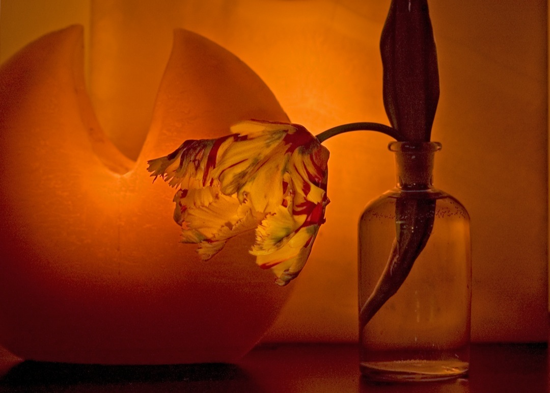 Still Life Fine Art Photography | Brukoff Photography