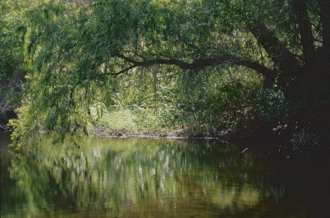 gg-park-tree-1-1080