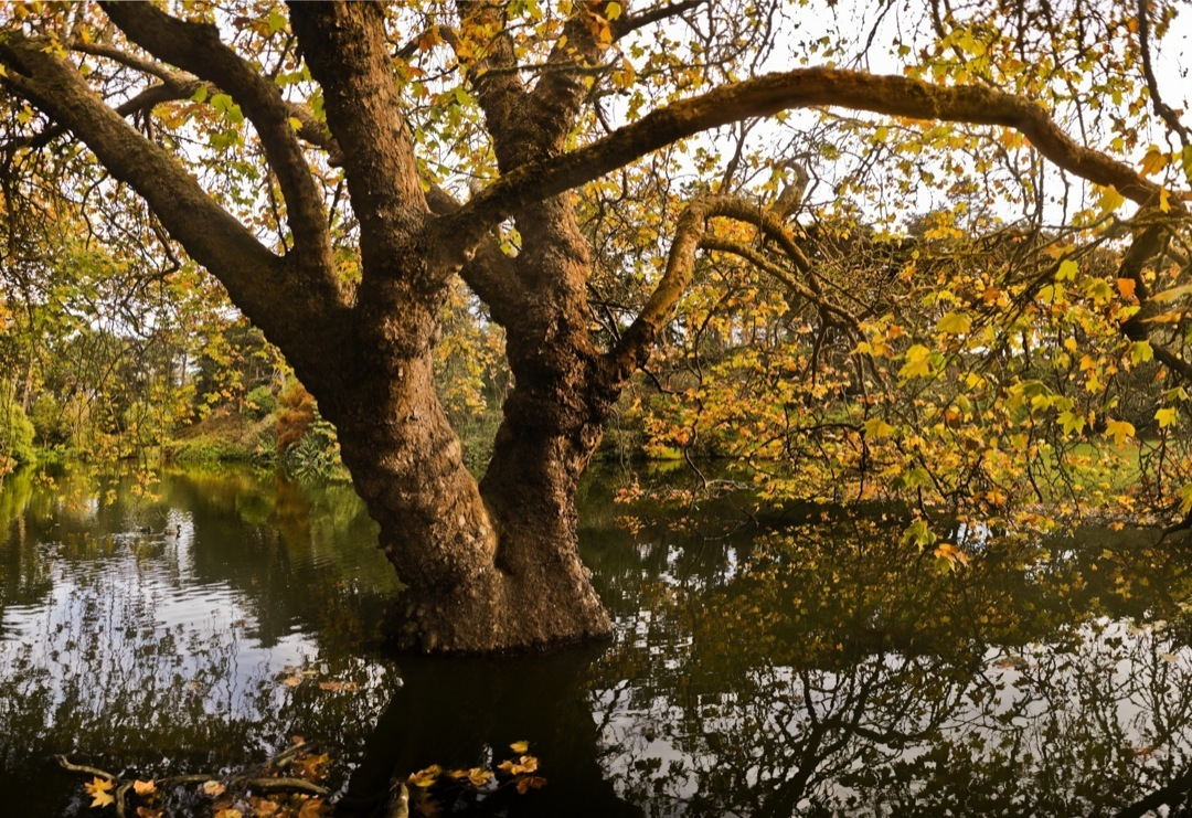 gg-park-tree-pano-2-final-1080
