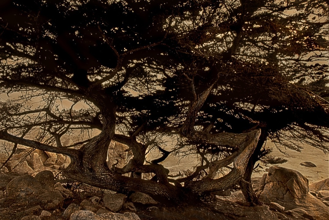 the-witch-tree-hdr-sepia-stylizer-1080