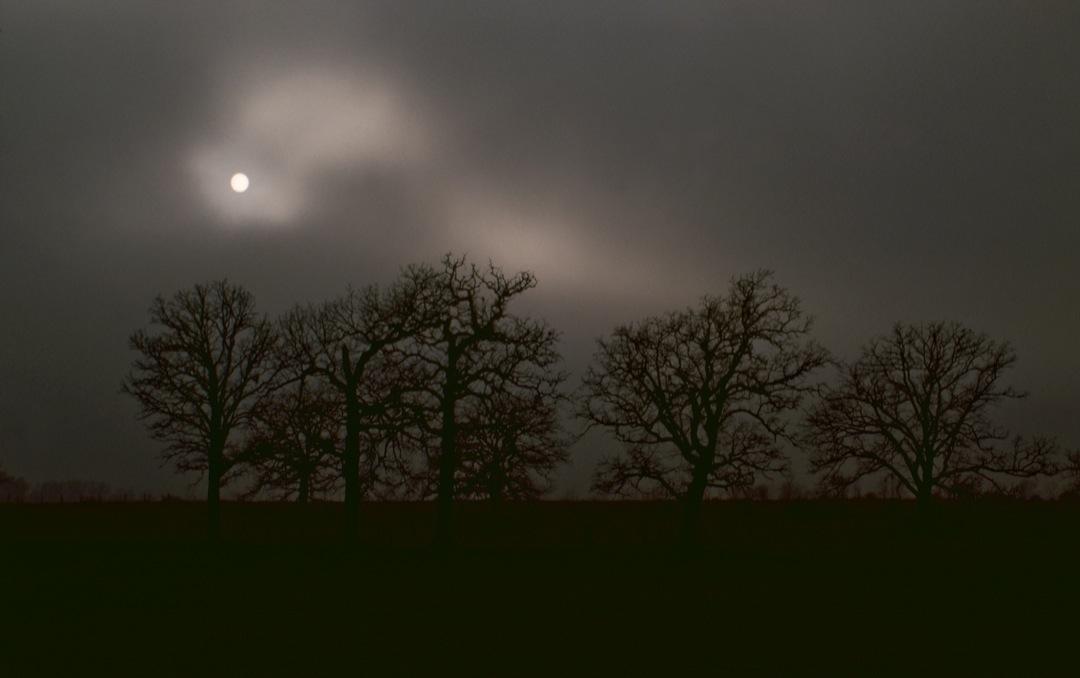 trees-moon-1080